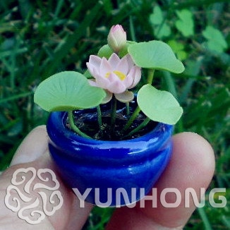 Perennial Flowers Seeds Many colors lotus seeds Teach you plant the L