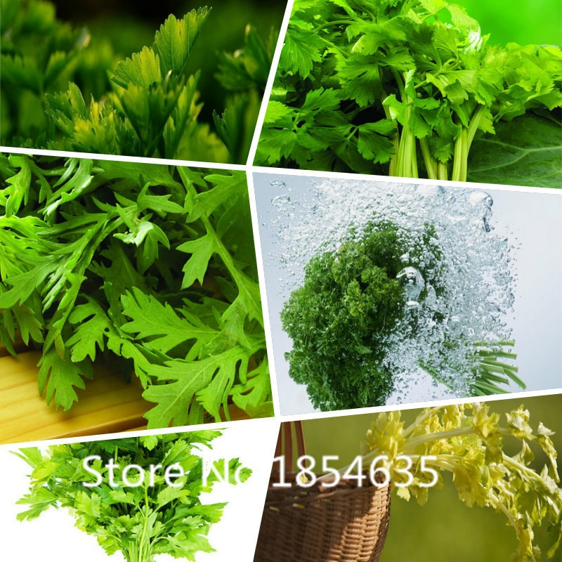 200 pcs/bag  Celery Seeds Vegetables, seeds Grow Courtyard Spice Cele