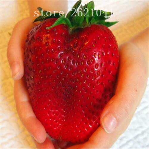 Big Giant Strawberry Seeds, Rare Sweet Four-season vegetable and fruit
