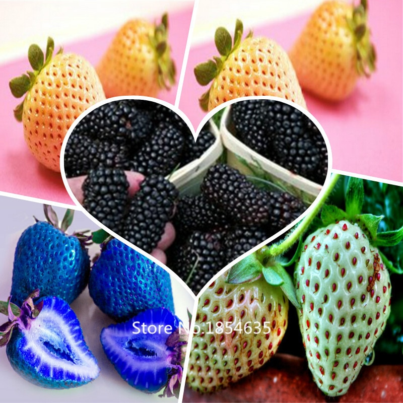 1 Professional Pack, 500 Seeds / Pack, Super Giant Strawberry seeds