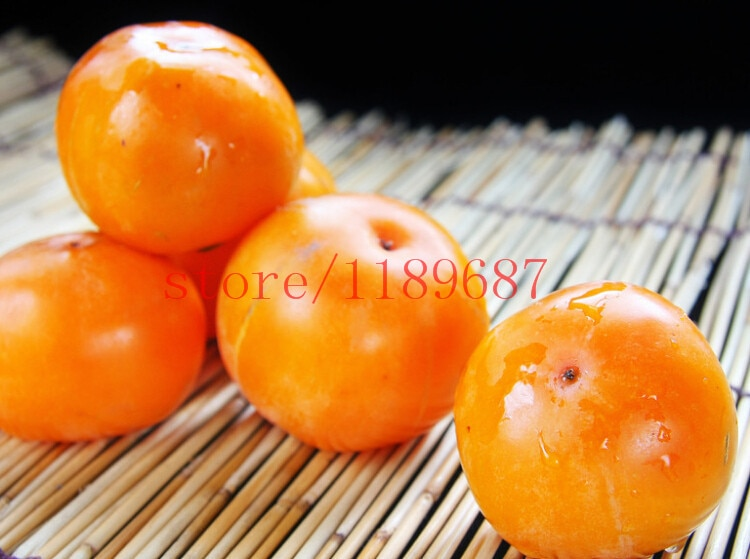 persimmon   2015 new seed Succulent Plants persimmon seeds fruit tree