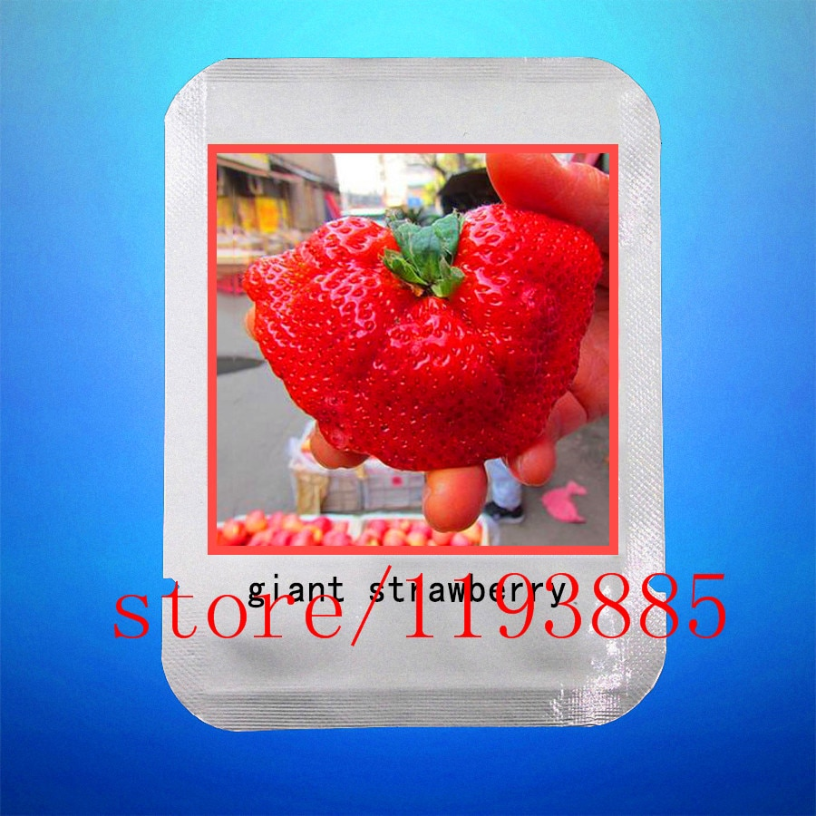 strawberry seeds professional makeup seeds fruit seeds for home garde