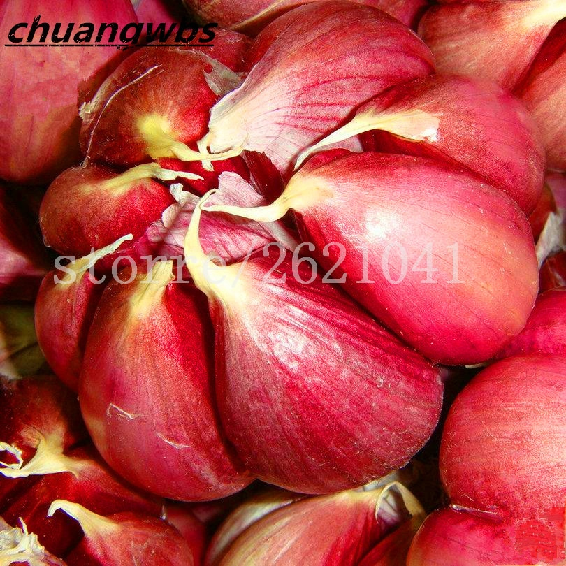 Seeds Red Healthy Green Vegetable Bonsai Seeds Plant Decoration Very E