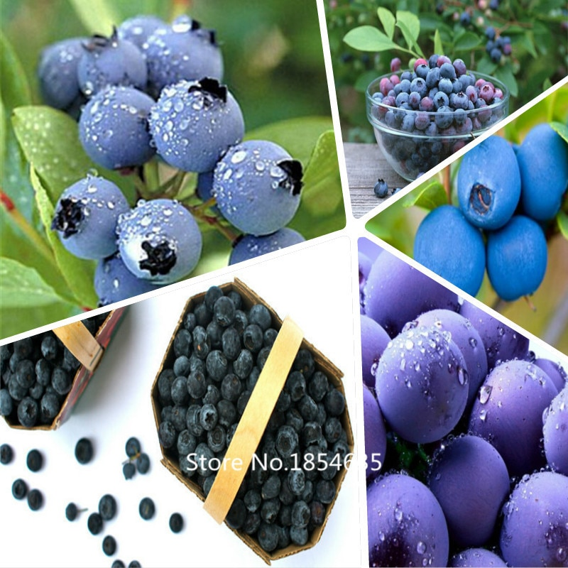 1 Professional pack, 200seeds / pack, Blueberry  Seeds, Vaccinium Cor