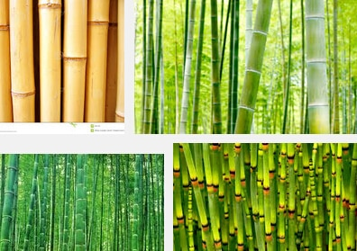 200pcs/bag  KINDS MIXED bamboo seeds,tree seeds potted balcony, plant
