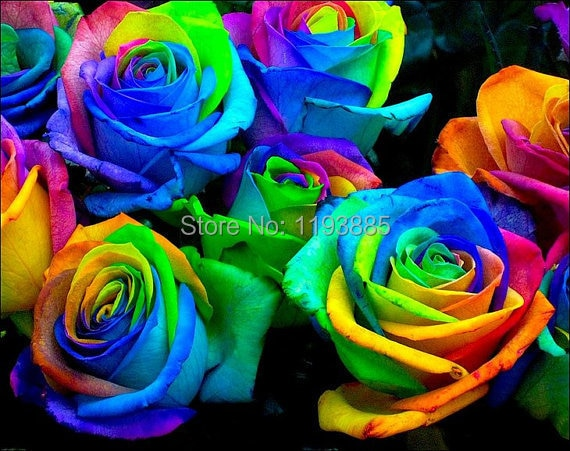 rose seeds rainbow flower seeds for home garden planting
